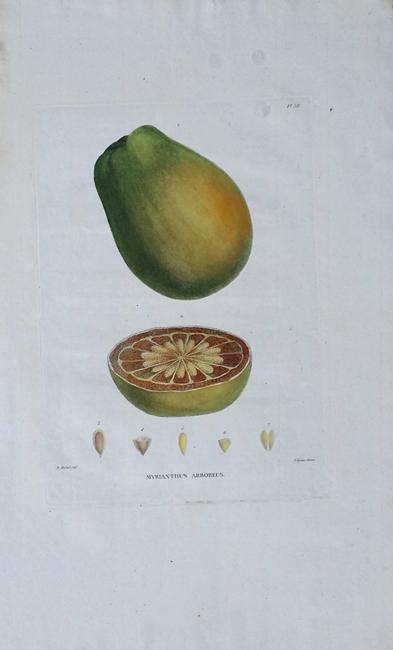 Palisot, Ambroise Marie Francois Joseph, Baron de Beauvois (1752-1820)