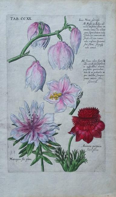 Valentini, Michael Bernhard (1657-1729) after De Bry, Theodor (1561-1623)