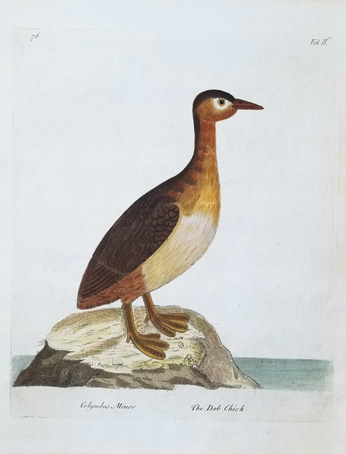 Albin, Eleazar (1694-1773) The Natural History of Birds (First Edition)