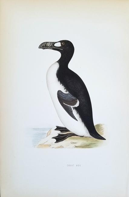 Morris, Francis Orpen (1810-1893) Ornithology Category