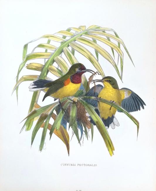 Miscellaneous Ornithology (19th Century)