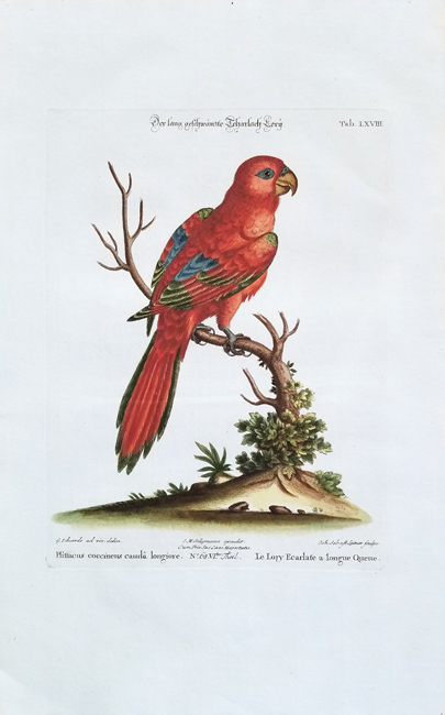 Seligmann, Johann Michael (1720-1762) / Edwards, George (1694-1773) Ornithology Category