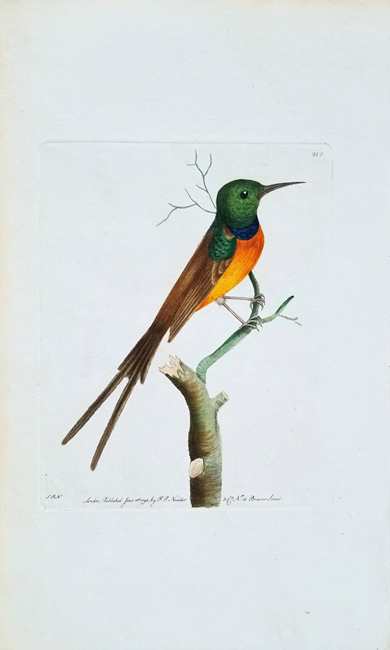 Shaw, George (1751-1813) / Nodder, Frederick (1770-1800) The Naturalist's Miscellany