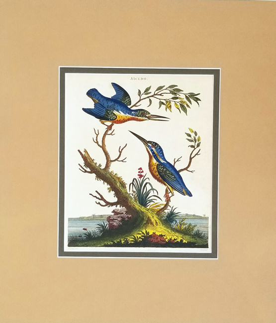 Wilkes, John (1750-1810) Ornithology Category