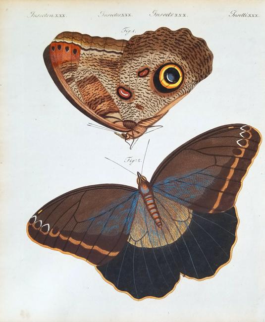 Bertuch, Friedrich Justin (1747-1822), Entomology Category