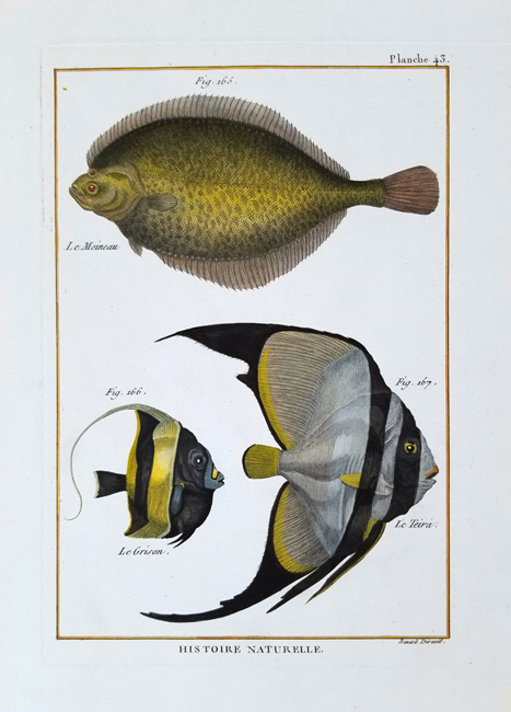 Bonnaterre, L'abbe Pierre Joseph (1747-1804), Ichthyology Category