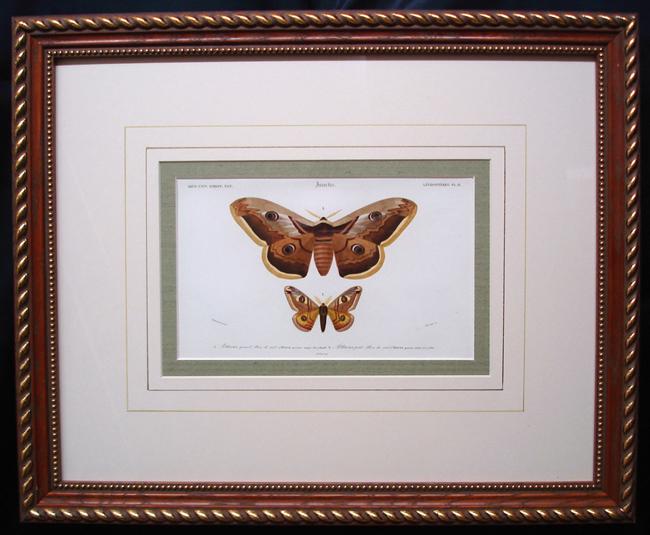 D'Orbigny, Charles Dessalines (1806-1876), Entomology Category
