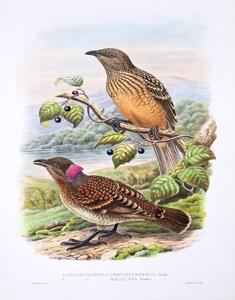 Ornithology (Birds)