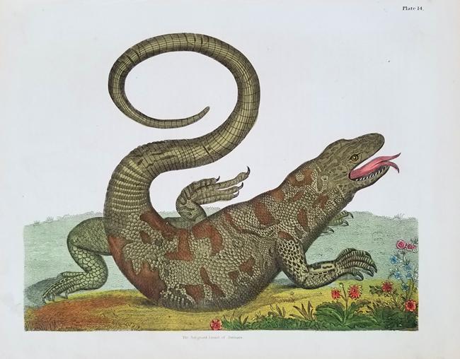 Miscellaneous Reptiles (19th Century)