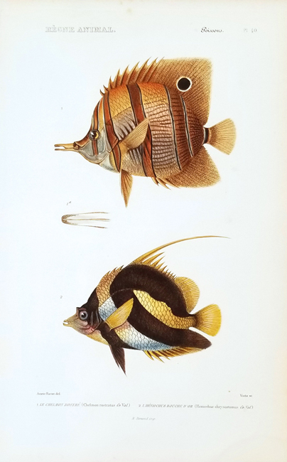 Cuvier, Baron Georges (1769-1832), Ichthyology Category