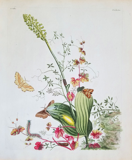 Wilkes, Benjamin (?-1749) The English Moths and Butterflies
