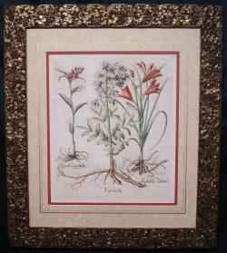 Fine Rare Botanical Antique Engraving