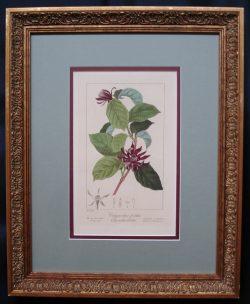 Original Antique Flower Engraving
