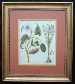 Original antique Floral print