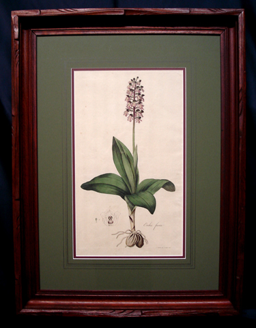 Curtis, William (1746-1799) Flora Londinensis, First Edition