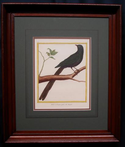 Martinet, Francois Nicolas (1731- c. 1790) Histoire Naturelle Des Oiseaux