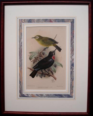 Proceedings of the Zoological Society of London, Ornithology Category