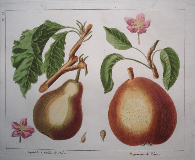 1) Imperiale a Feuilles de Chene, 2) Bergamotte de Paques
