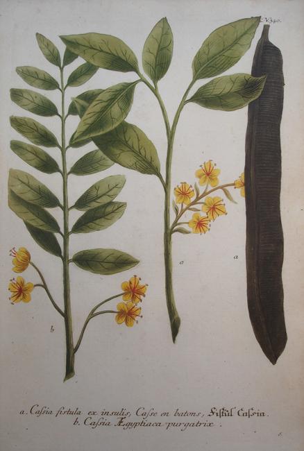 a) Cassia fistula ex insulis, Casse en batons, b) Cassia Aegyptiaca purgatrix