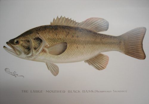 The First Annual Report of the Commissioners of Fisheries, Game and Forests of the State of New York; Report for 1895