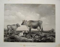 The Pasture, Osborne