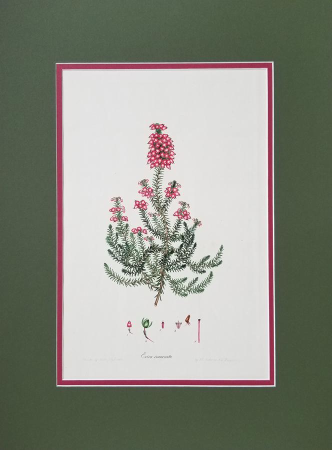 Antique Flower Engraving,