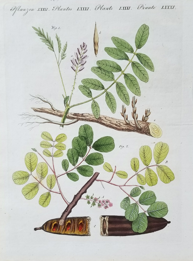 Fine Antique Botanical Engraving