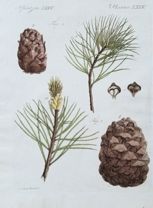 Botanical Antique Engraving