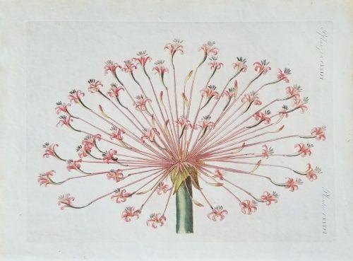 Antique Floral flower print