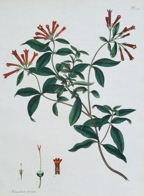 Botanical plant print