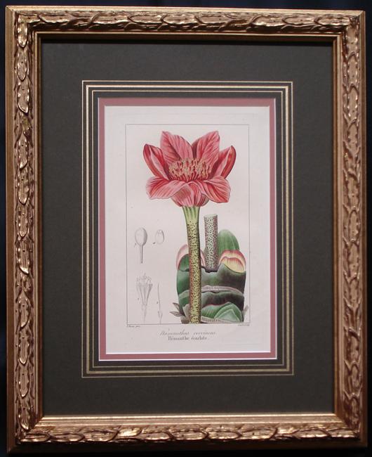 Bessa, Pancrace (1772-1836) L'Herbier Generale de L'Amateur