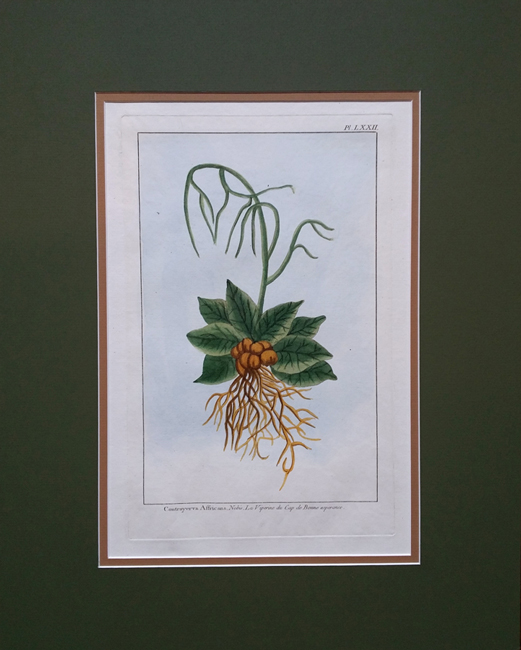 Buchoz, Pierre Joseph (1731-1807) Jardin d'Eden (Garden of Eden)