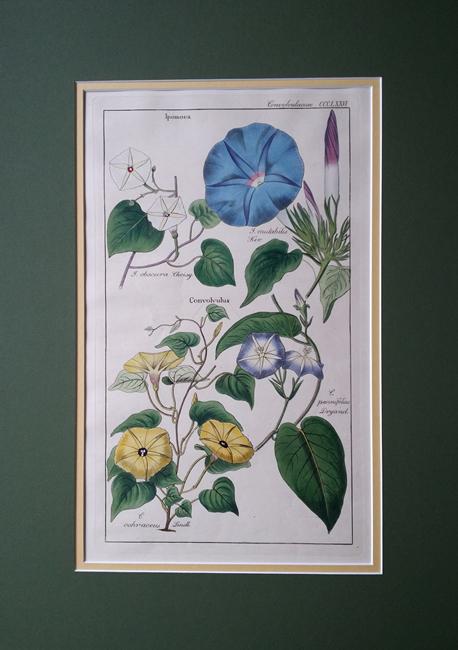 Dietrich, Dr Nathaniel Friedrich (1800-1888) Flora Universalis
