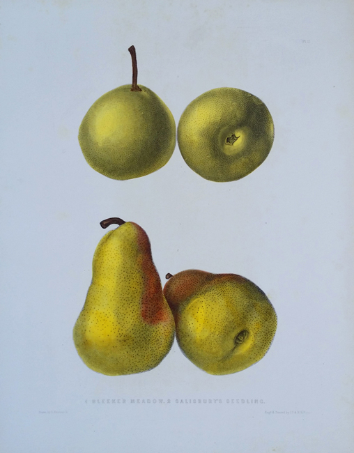 Emmons, Ebenezer (1799-1863) (Fruits)