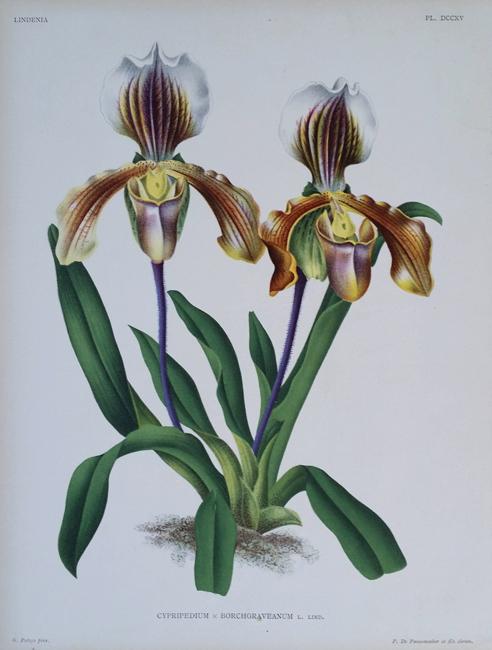 Linden, Jean Jules (1817-1898) (Lindenia)