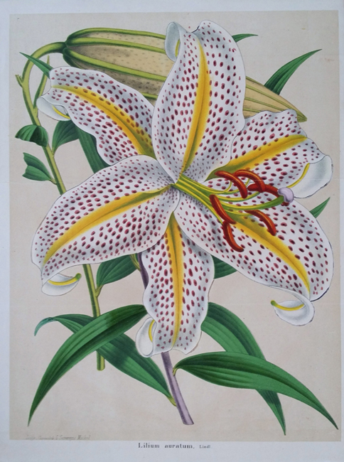 Miscellaneous Botanical (18th and 19th Century)