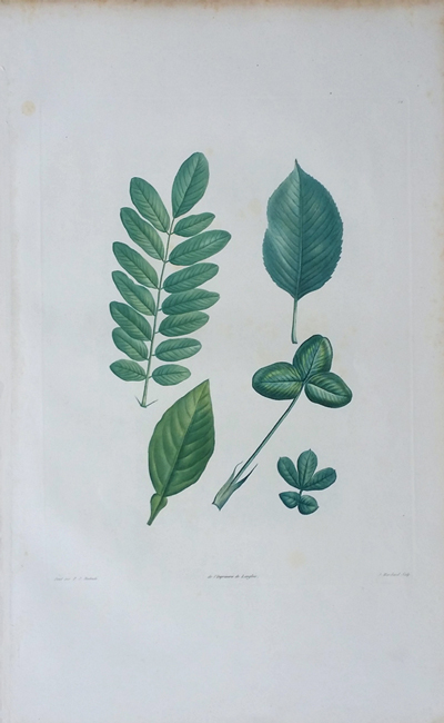 Redoute, Pierre-Joseph (1759-1840)