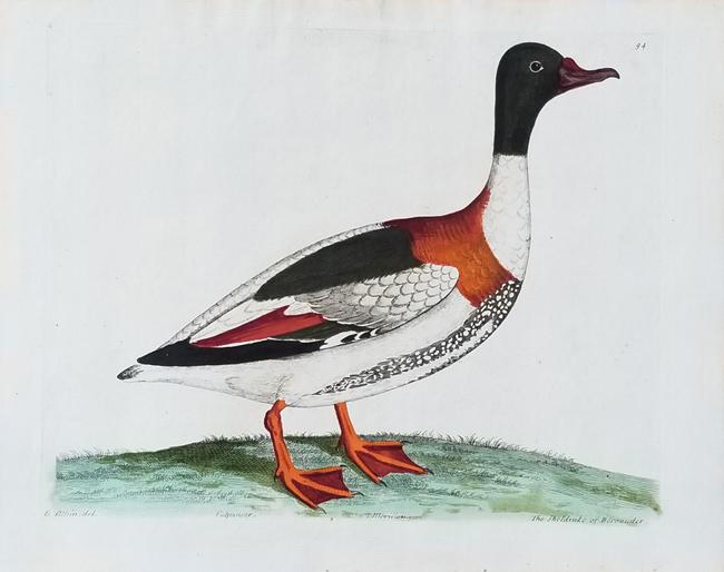 Albin, Eleazar (1694-1773) Histoire Naturelle des Oiseaux (French Edition)