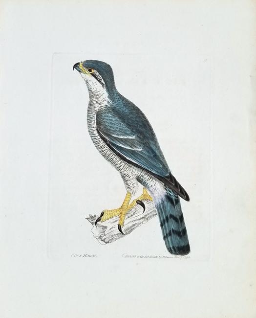 Lewin, William (1747-1795)