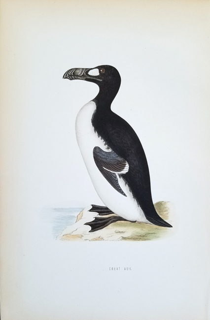 Morris, Francis Orpen (1810-1893) Ornithology Category