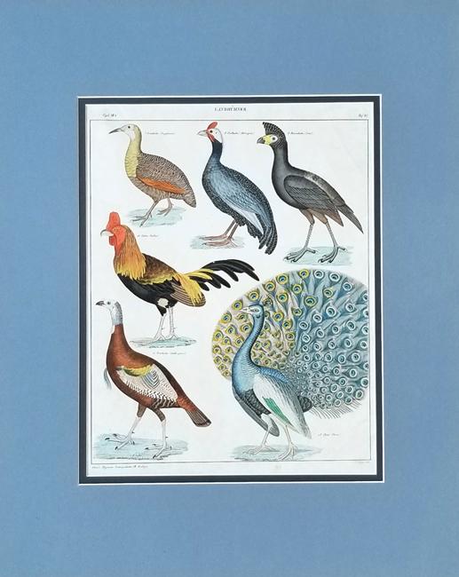 Oken, Lorenz (1779-1851) Ornithology Category