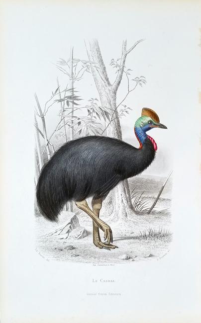 Travies, Edouard (1809-1865) Ornithology Category
