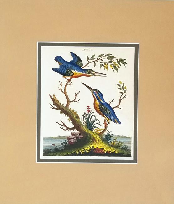 Wilkes, John (1750-1810) Ornithology Category
