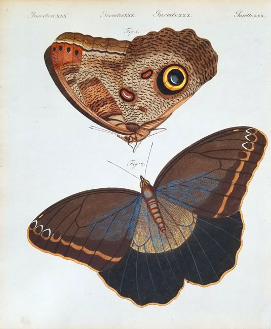 Bertuch, Friedrich Justin (1747-1822), Entomology Category