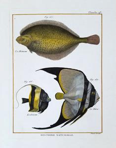 Ichthyology (Fish)