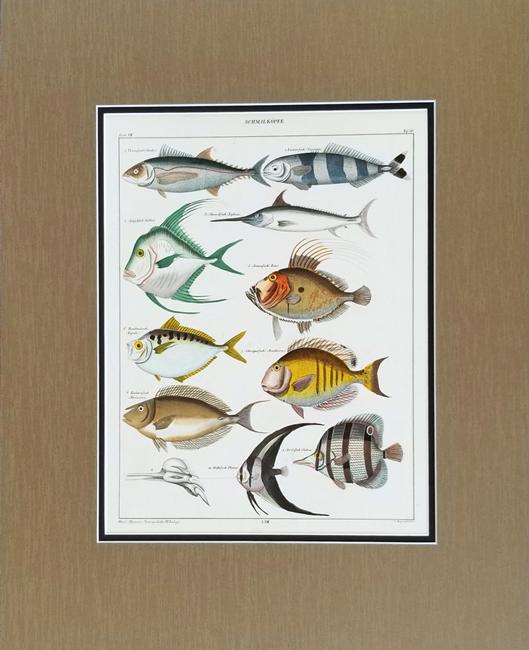 Oken, Lorenz (1779-1851) Ichthyology Category