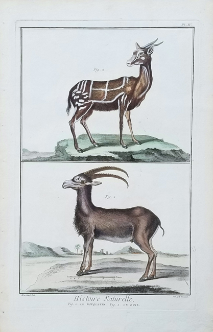 Martinet, Francois Nicolas (1731- c. 1790) Quadruped Category