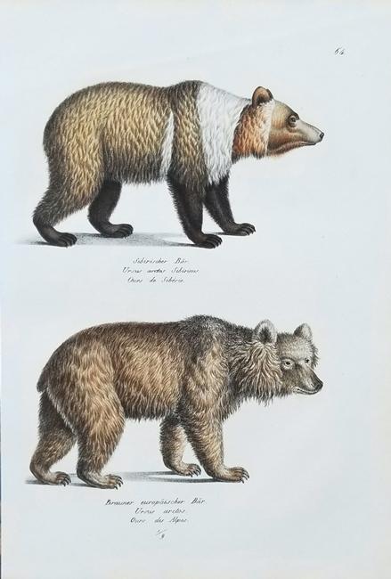 Schinz, Heinrich Rudolf (1777-1861), Naturgeschichte Naturhistorische Abbildungen der Saeugethiere (Natural History of Mammals)