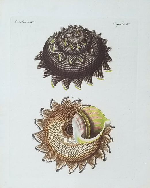 Bertuch, Friedrich Justin (1747-1822), Conchology Category