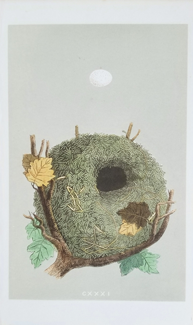 Morris, Francis Orpen (1810-1893) Eggs and Nests Category